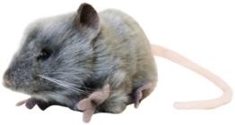 Kuscheltier, Ratte, Fett von Hansa. 5579 - 1