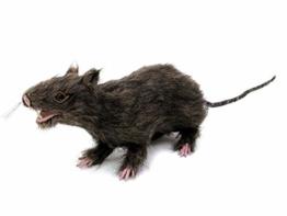 EUROPALMS Lebensechte Ratte mit braunem Fell   30 cm Länge   Dekoration für ihre Halloween-Party - 1